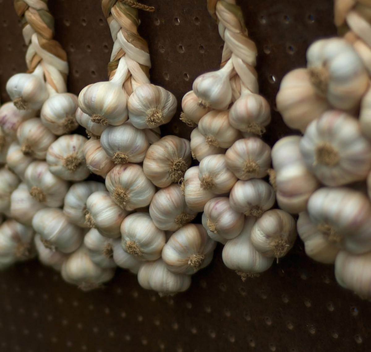 Braided garlic (Creative Commons - CC BY 3.0 - via Flickr).