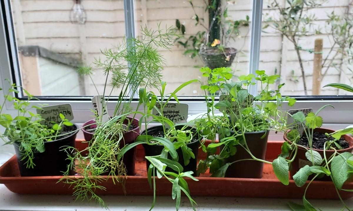 Herbs on your windowsill anyone?