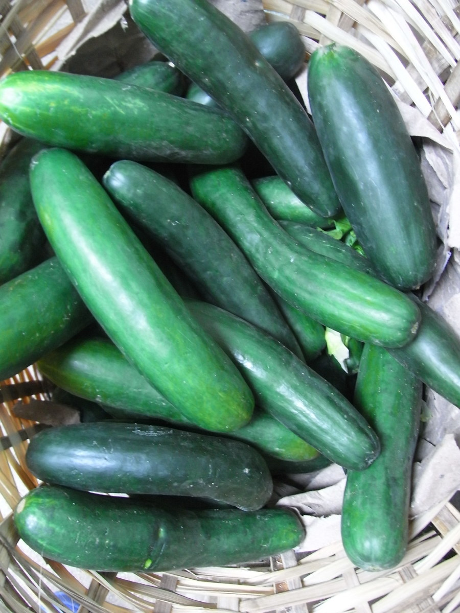 Health Benefits of the Green Cooling Cucumber