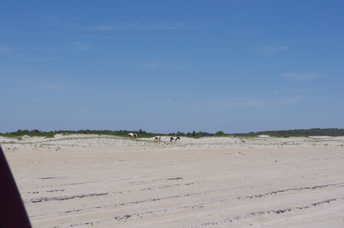 The Relaxing Atmosphere of Assateague Island
