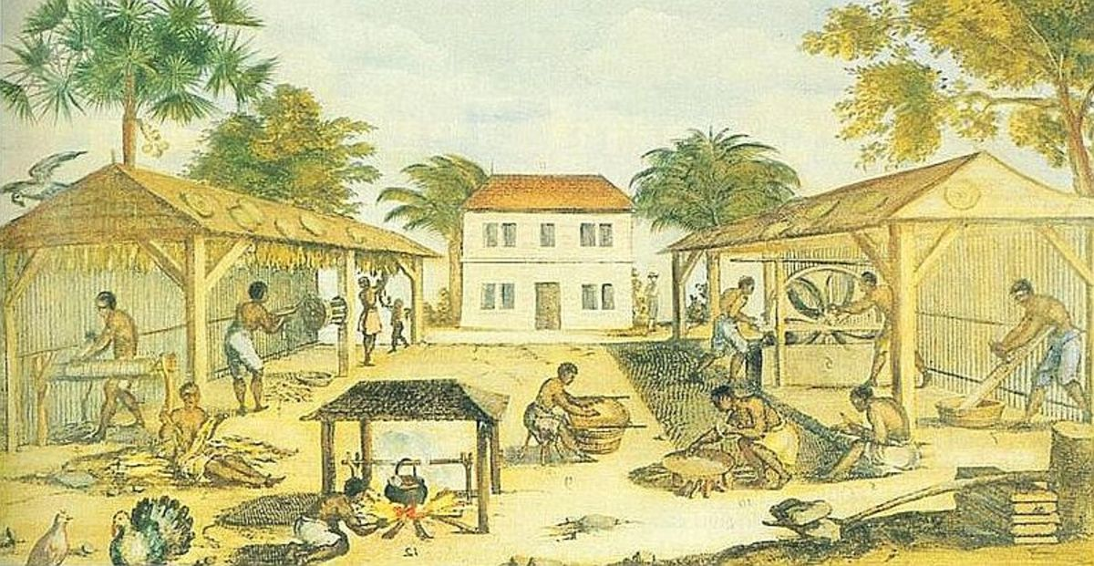 Tobacco cultivation in the colonies about 1670