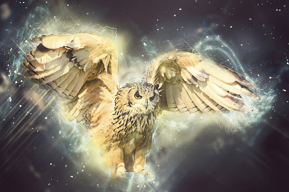 Birds of prey are among the most popular spirit animals. And often the spirit animals people imagine for themselves are white, such as horse, buffalo, wolf, tiger, and deer.