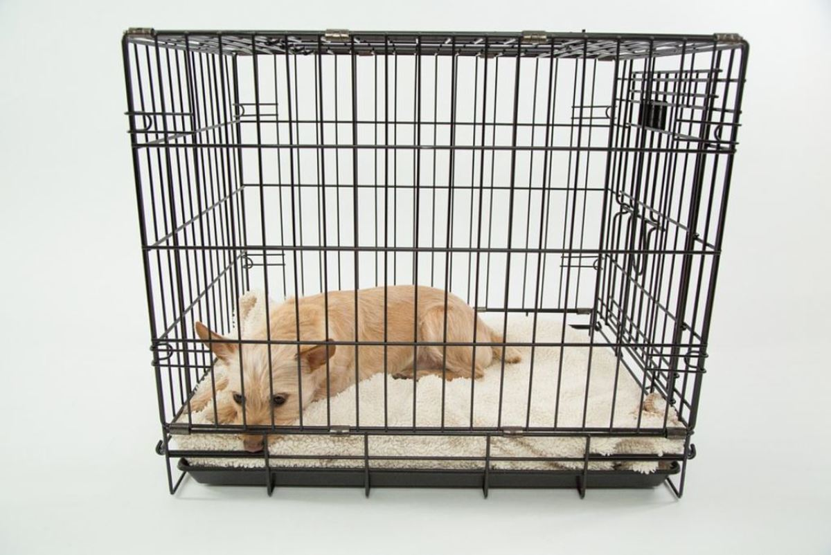 A puppy pooping in the crate can be a frustrating problem.
