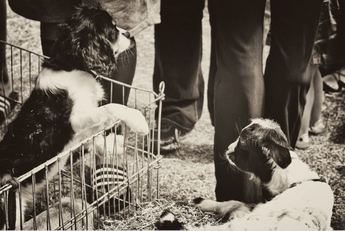 Puppies sold in pet stores or other places are often forced to soil in their crates.