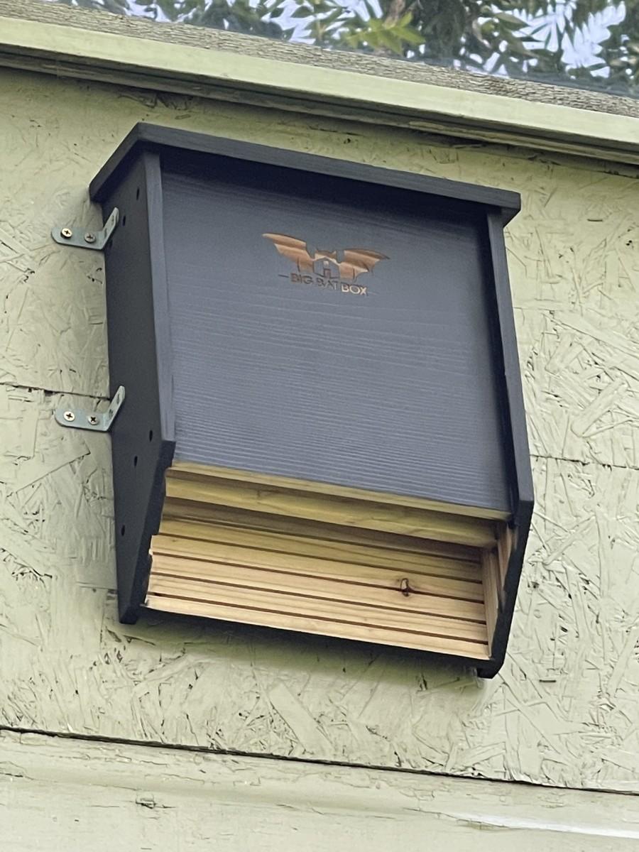 My bat house, installed on my garage just above my garden.