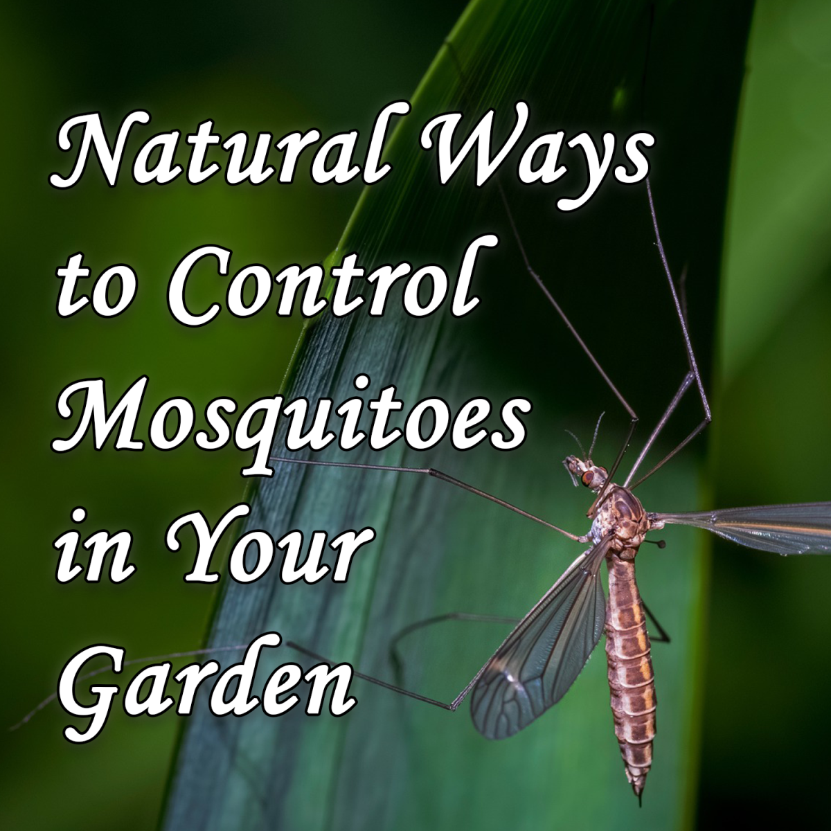 Natural Ways to Control Mosquitoes in Your Garden