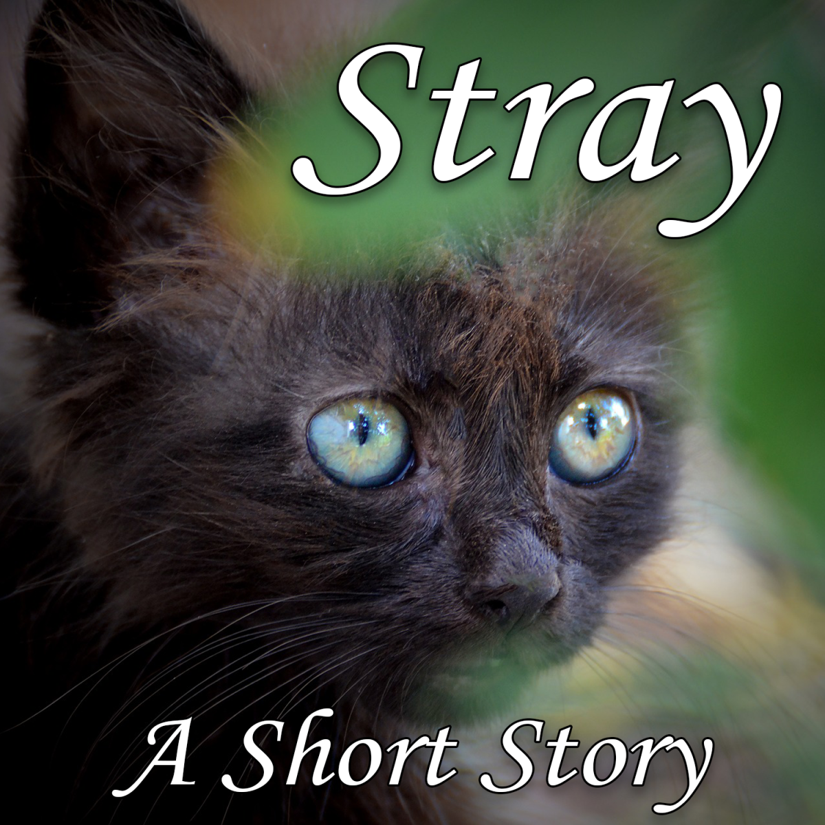 Stray: A short story about a lonely black kitten.