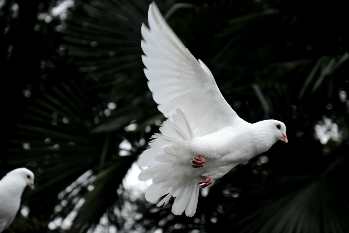 The Holy Spirit Have Many Functions That He Performs