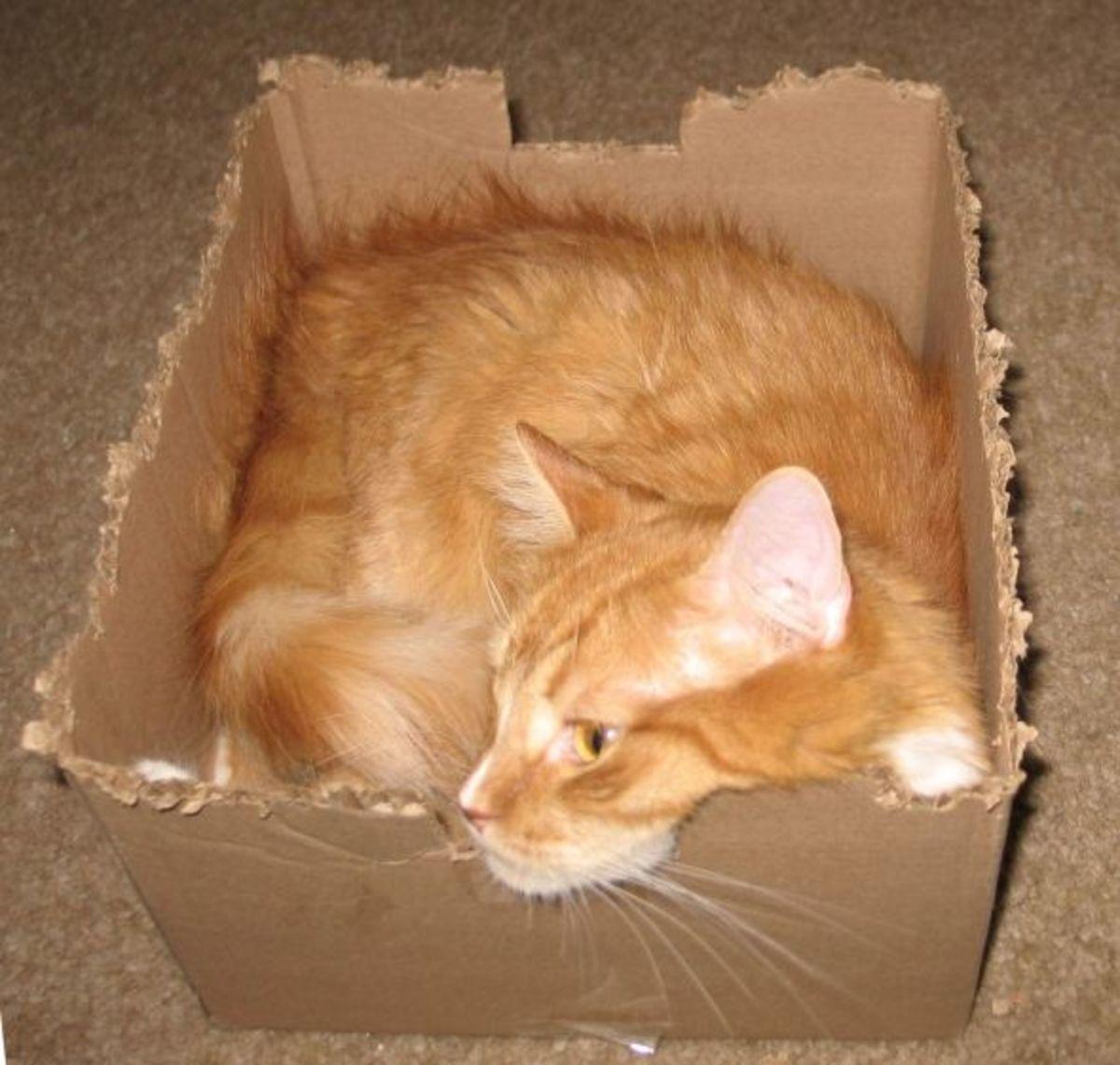 Orange cat in a square cardboard box