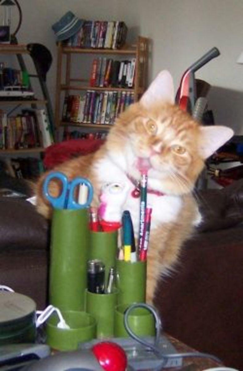 Orange cat stealing a pencil.