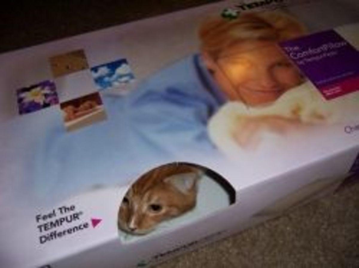 cute_ginger_kitty