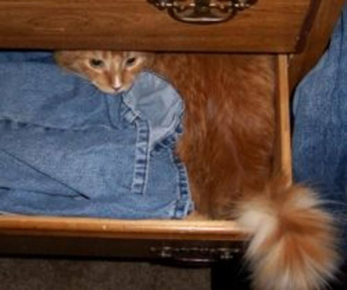 A self-folding marmalade cat in a drawer