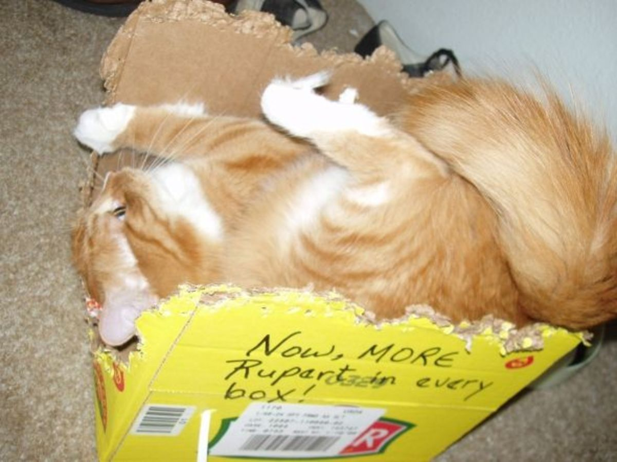 Possessed by the kitten crazies, Rupert spins like Sonic the Hedgehog in his beloved cardboard boxes.