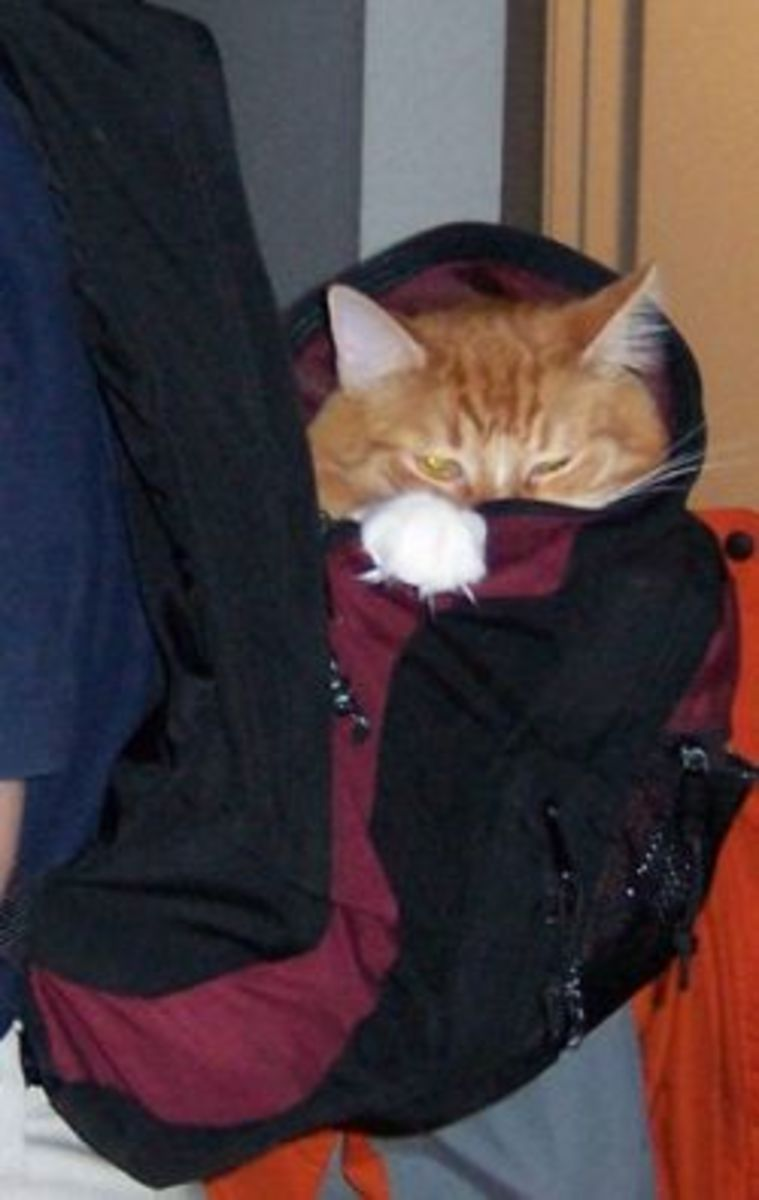 His humom left her backpack sitting open so Rupert just climbed in then she put it on.