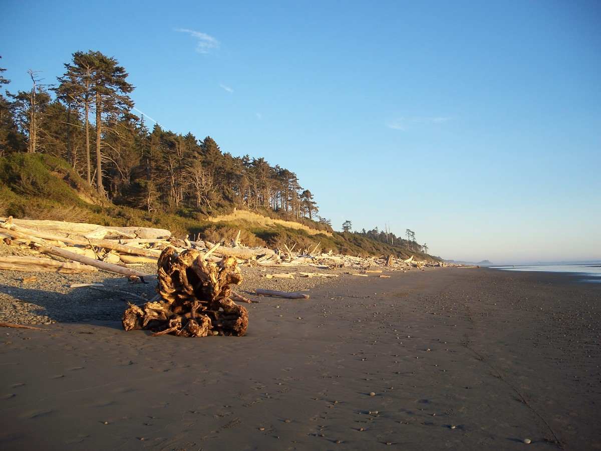 Beach near South Beach campground.  Olympic National Park.  Washington.