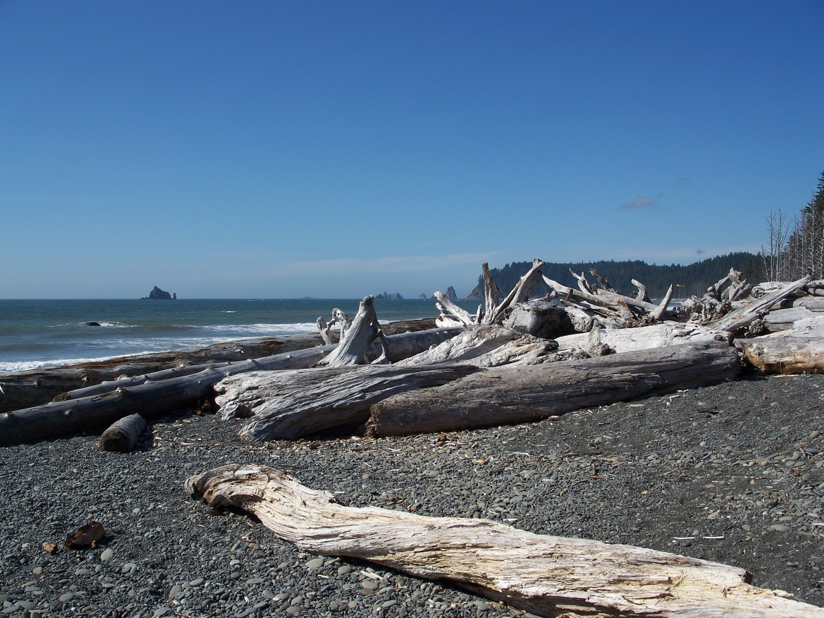 Tree trunks on the beach.  Olympic National Park.  Washington.