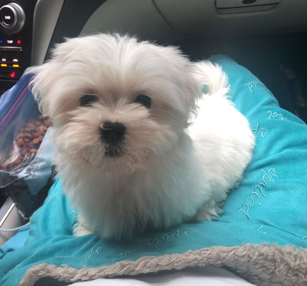 This is me in the car on the way to my new home.
