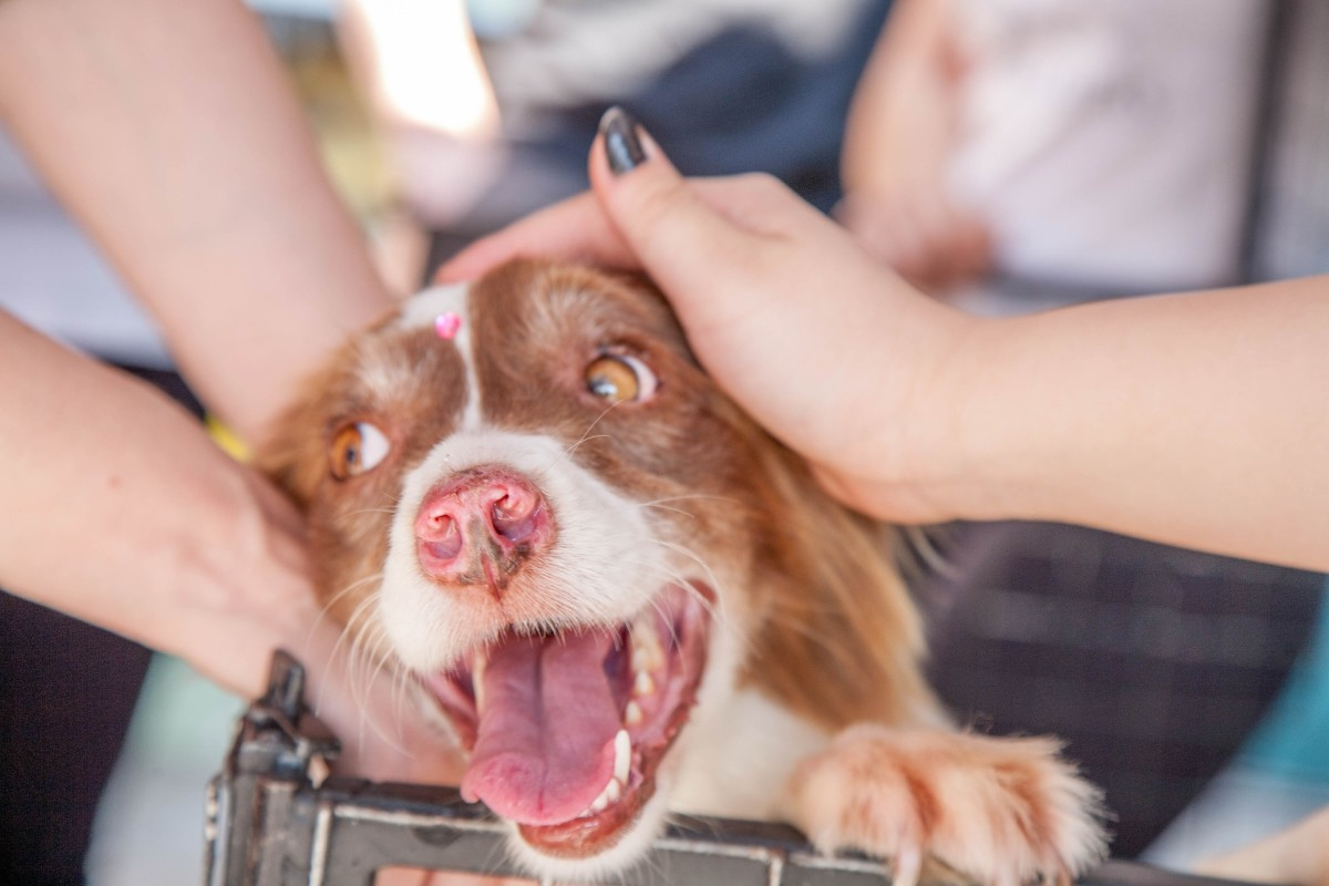 Working with animals has been shown to be particularly effective at combating stress, anxiety, and depression.