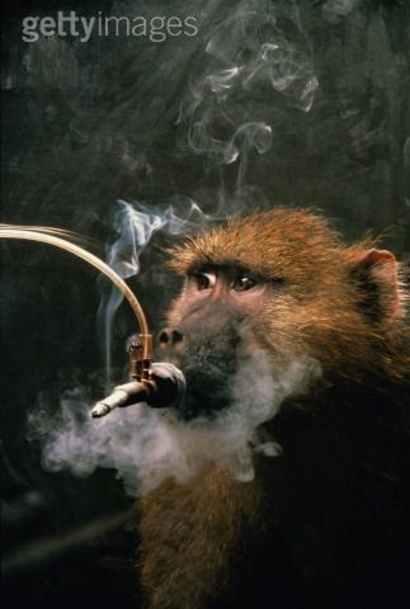 What animals suffer for our cigarette smoking habits