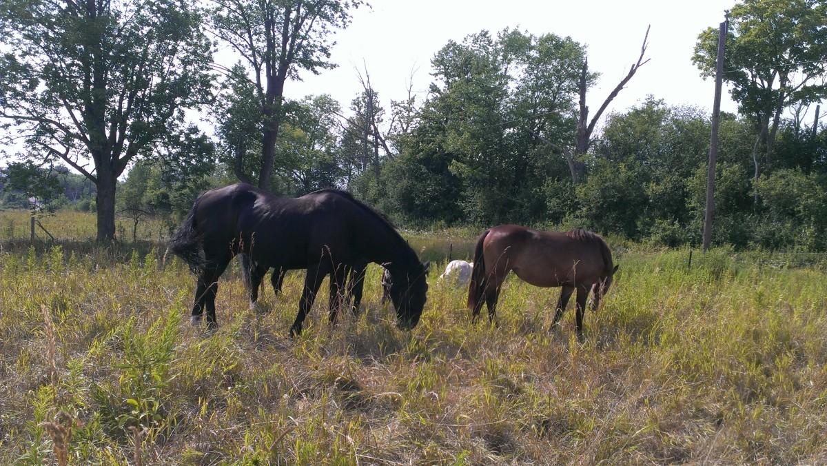 The Harmonious Horses and Ponies of Harmony Farm Rice Lake