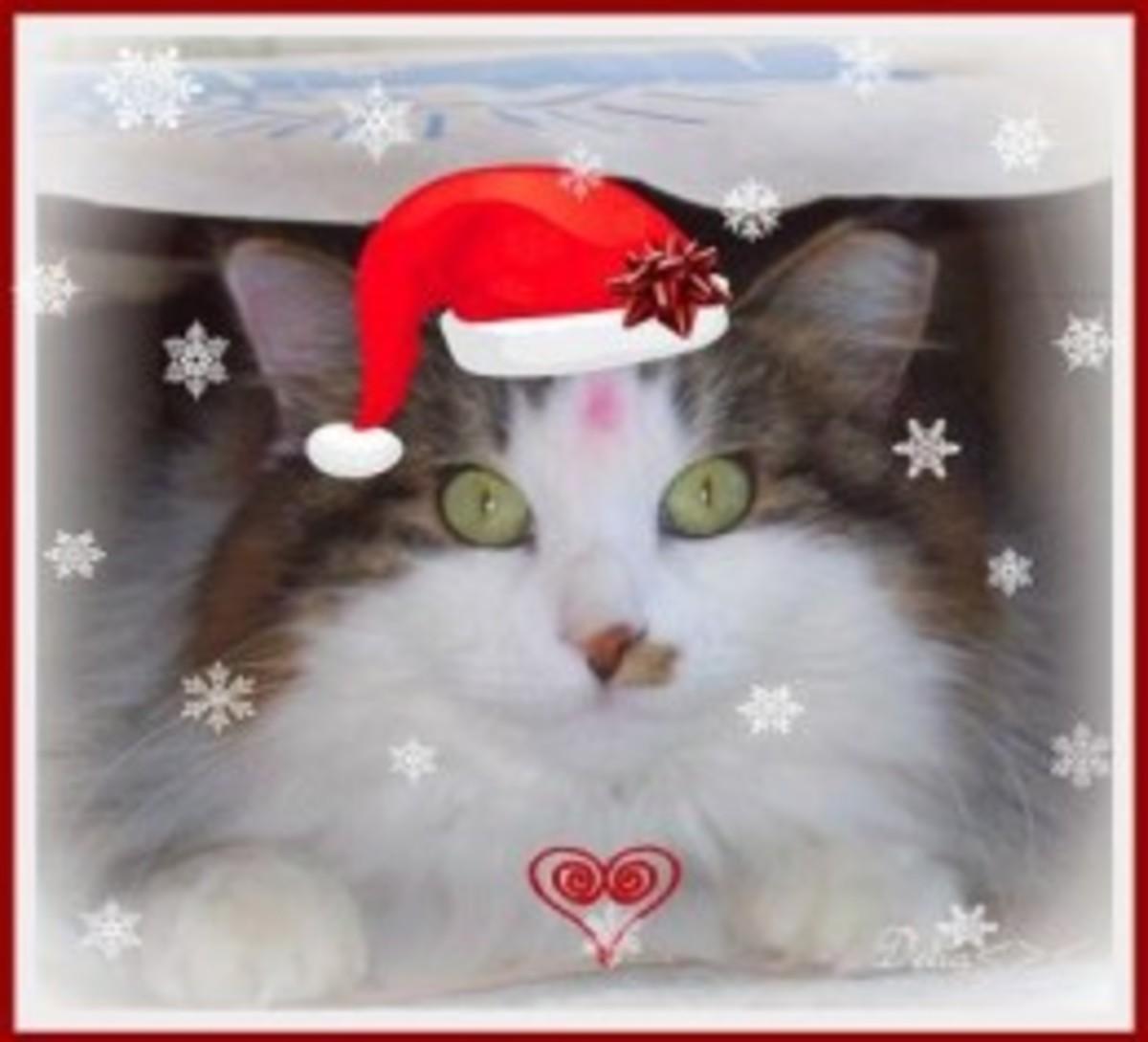 Xmas Kitty 2012