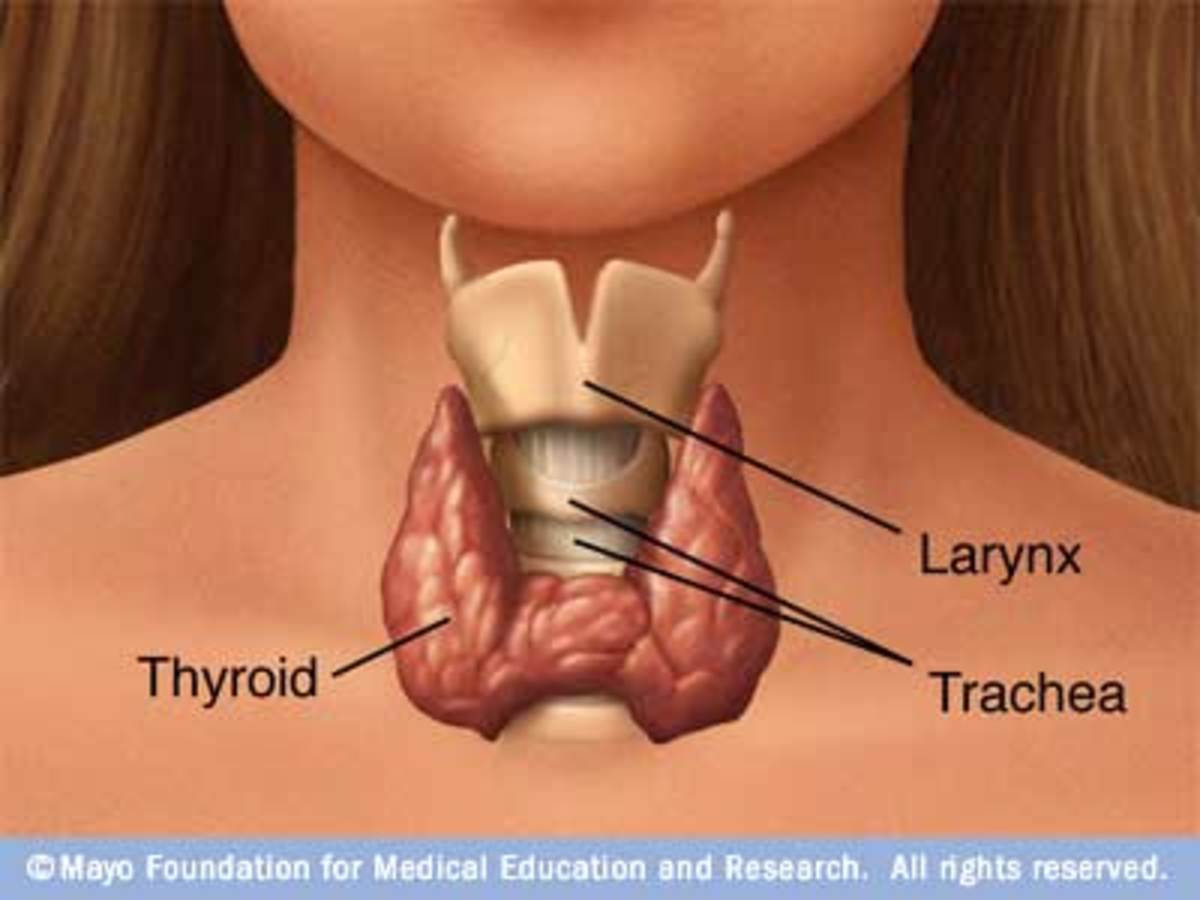 What the thyroid is and where it's located
