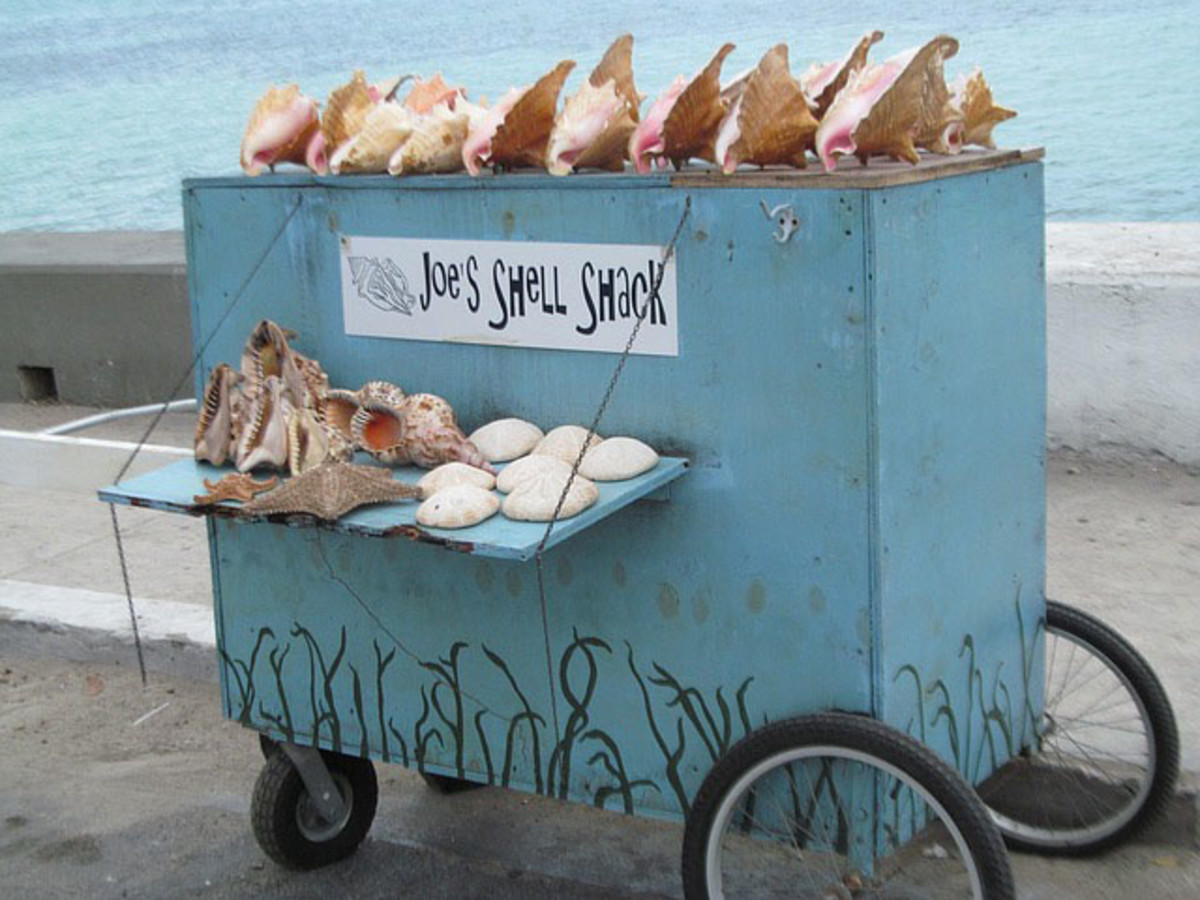 A small beach cart is being used to  display attractive sea shells.