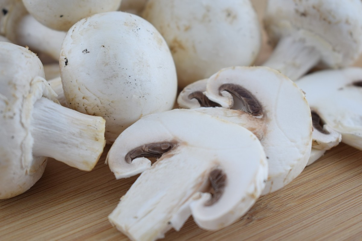 Great Information About Mushrooms
