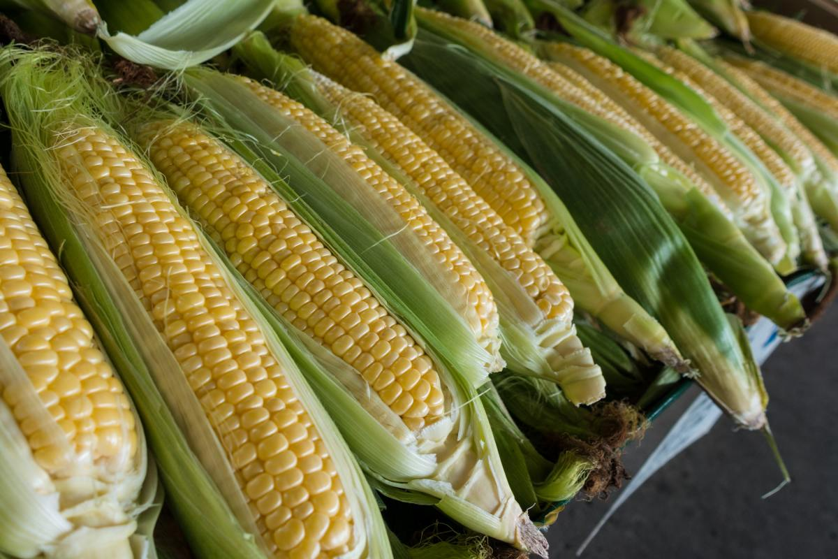 Corn earworms can ruin an entire crop of delicious sweet corn. Learn how to get rid of them without using any harsh chemicals.