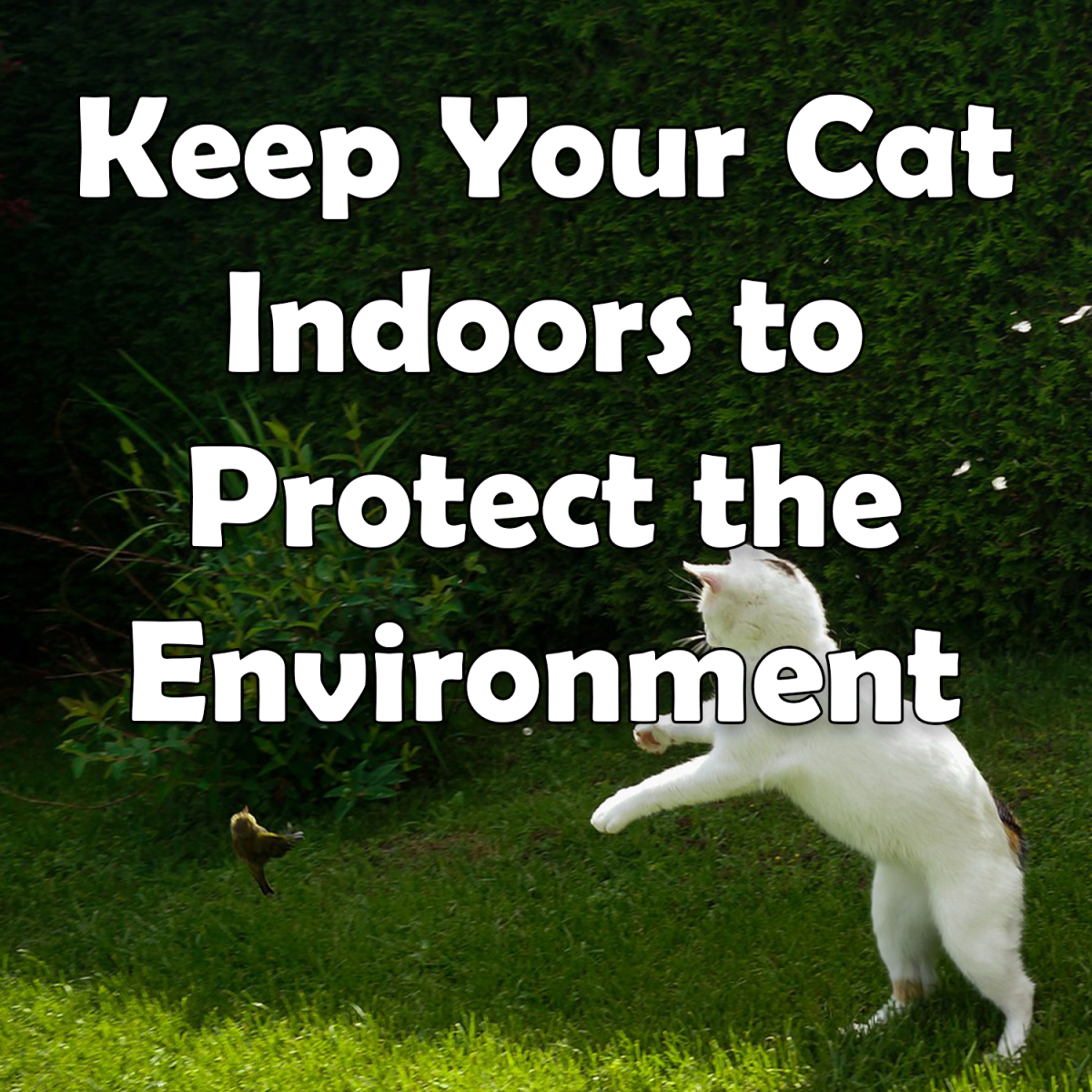 Keep Your Cat Indoors to Protect the Environment