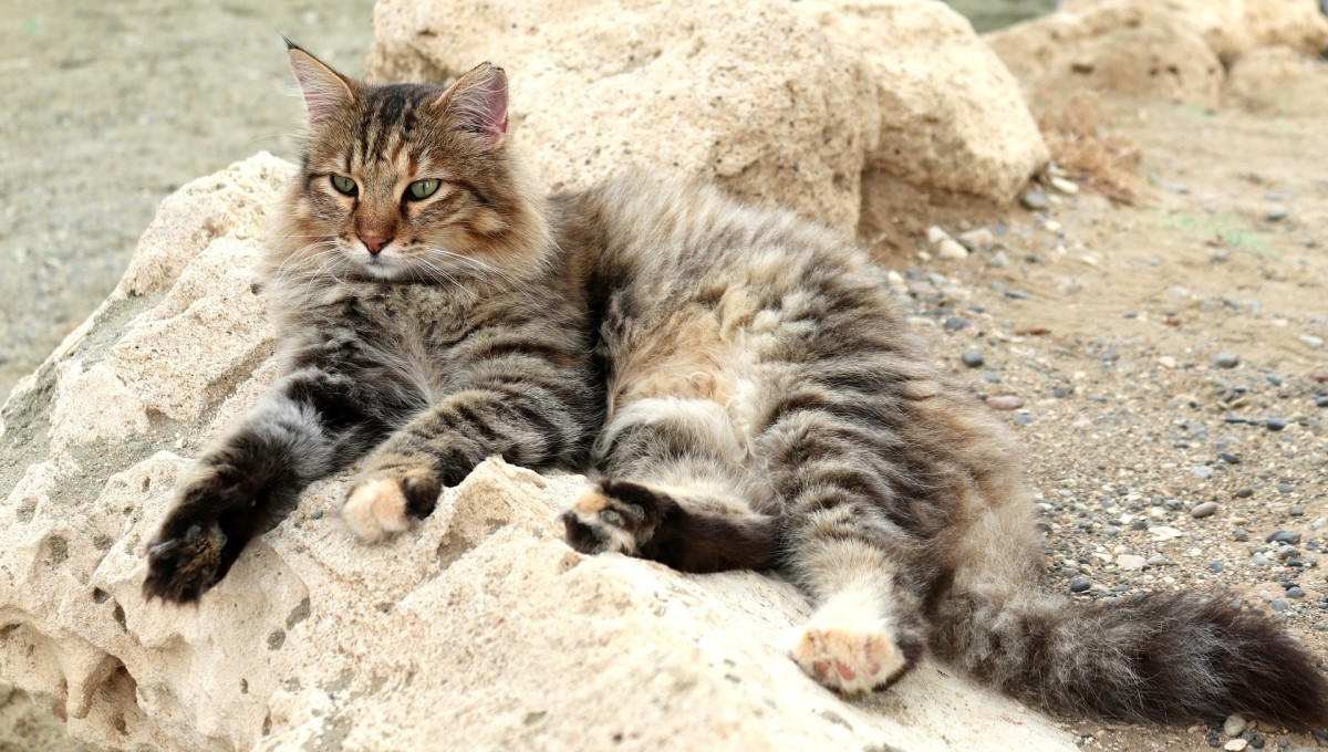 Cats can spread Toxoplasmosis to other animals.