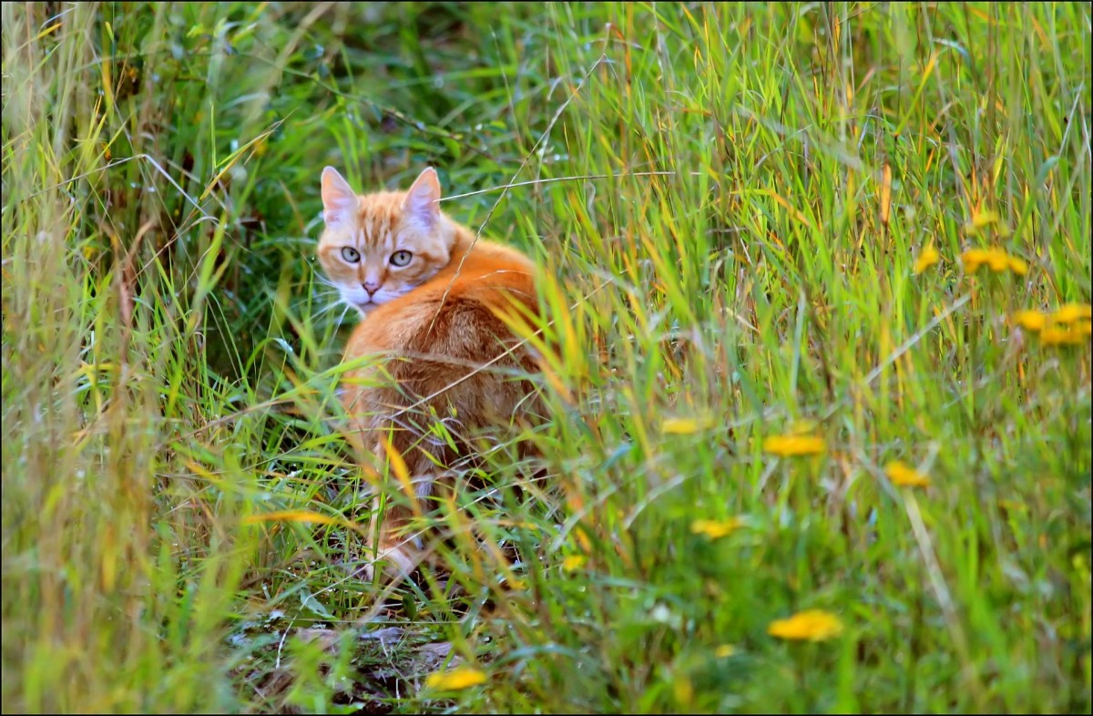 Cats can disrupt the entire ecosystem when allowed to roam.