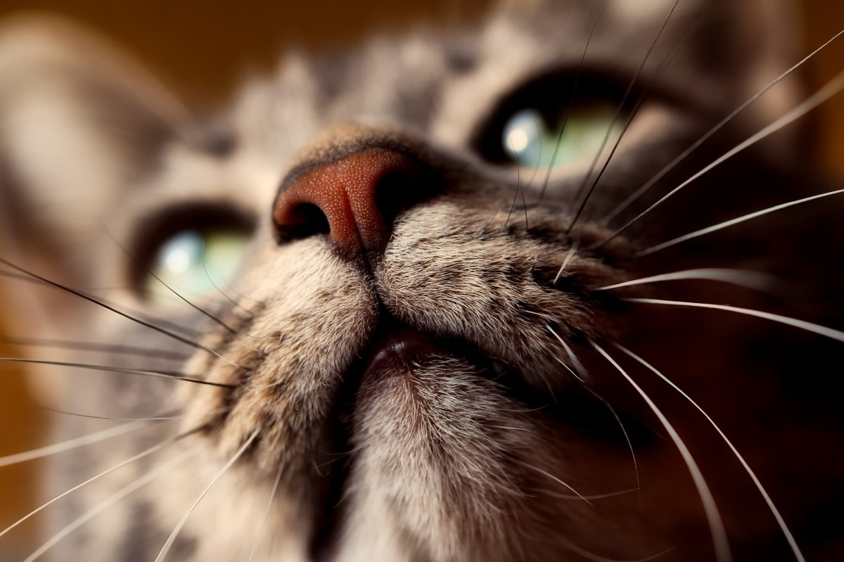 Cats have very sensitive whiskers.