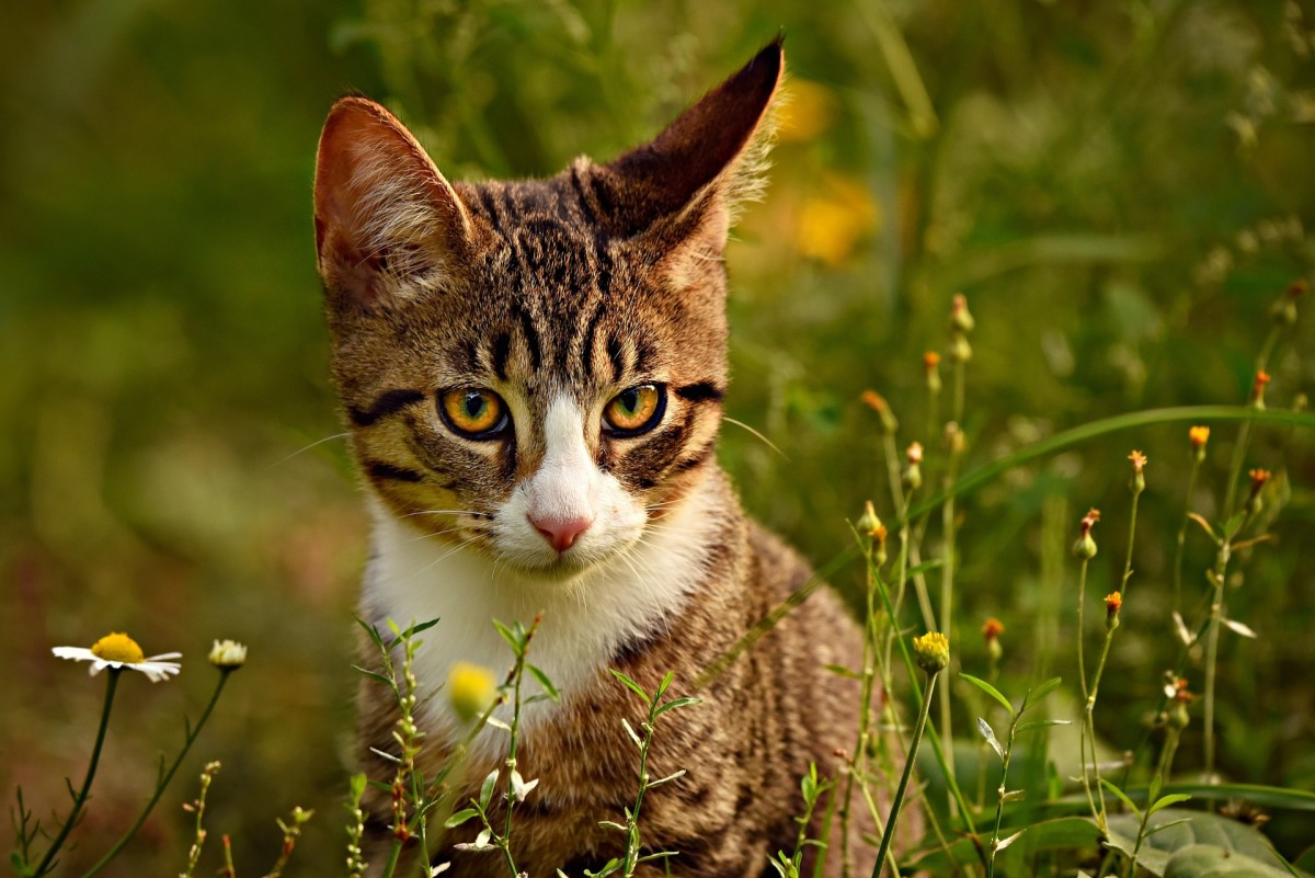 Cats have adorable ears, which also help them hunt small animals.