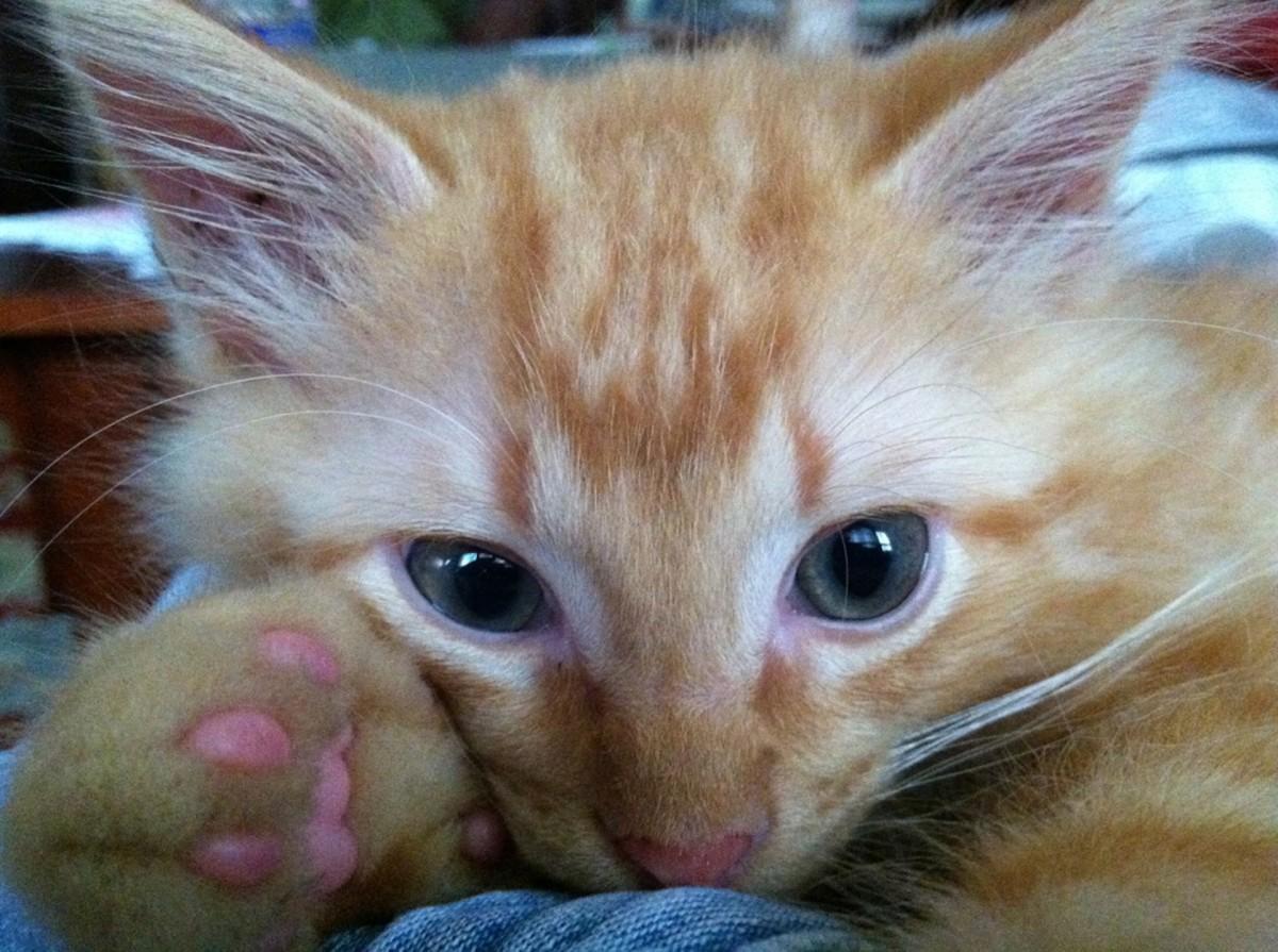 Everyone loves some kitten toe beans!