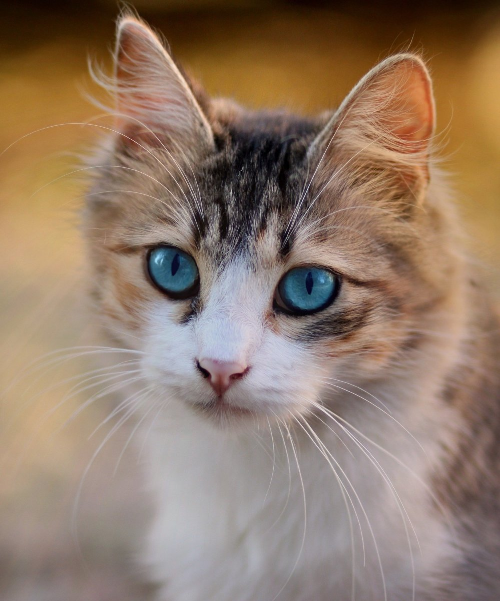 Cats have big eyes that are specially adapted for hunting prey.