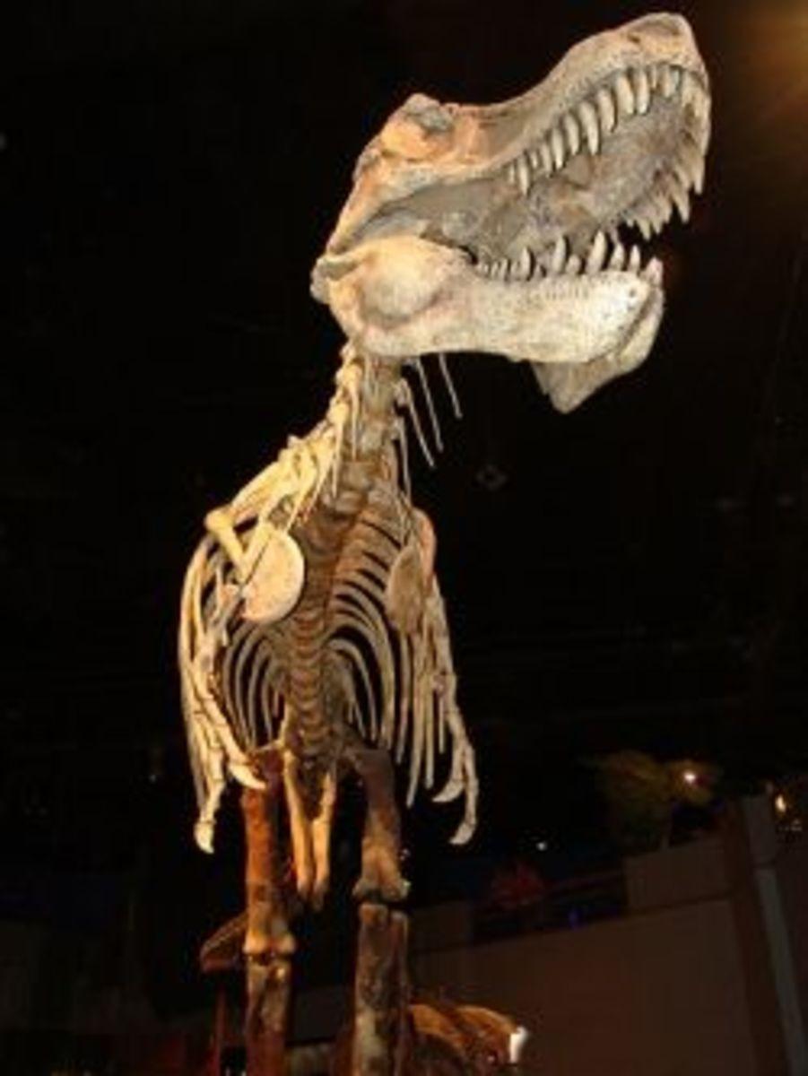 Dinosaur Bones at Tyrell
