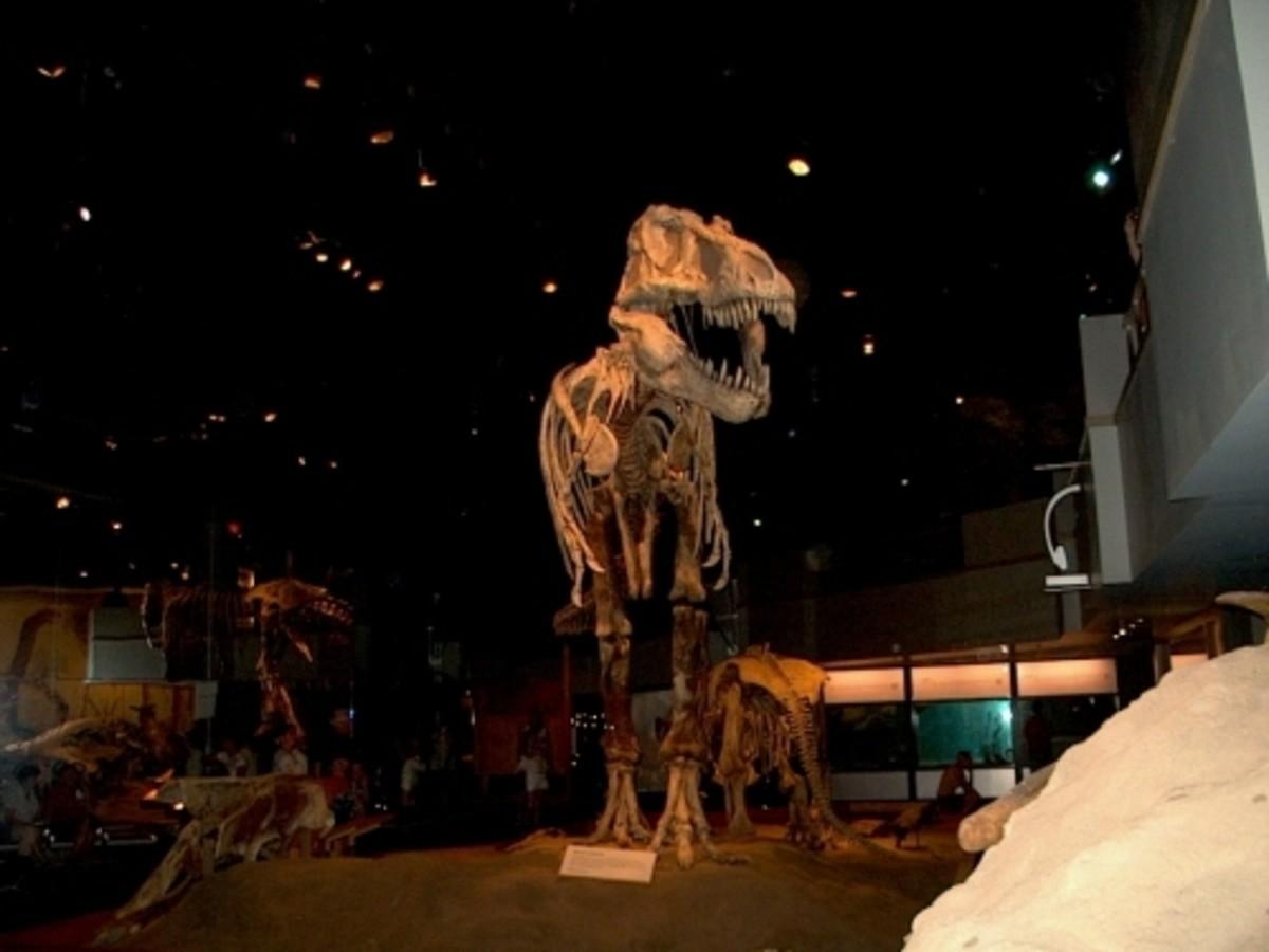 Dinosaur replica in the Tyrrell Museum