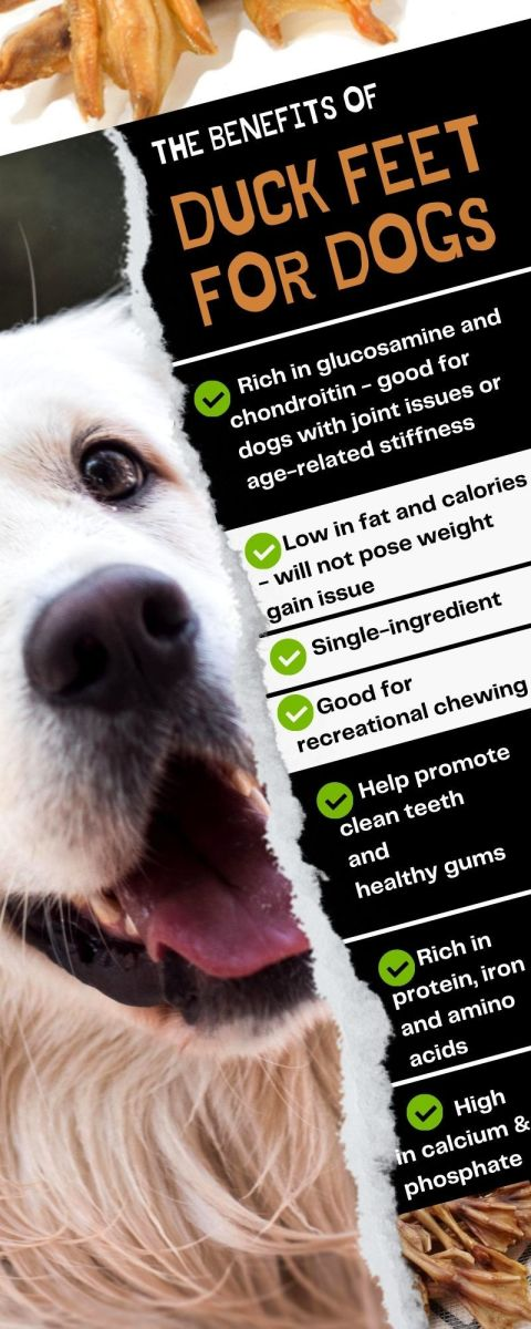 Infographic on the benefits of duck feet for dogs