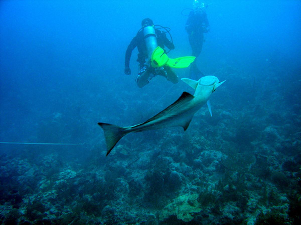 Scuba Diving in Bahamas.