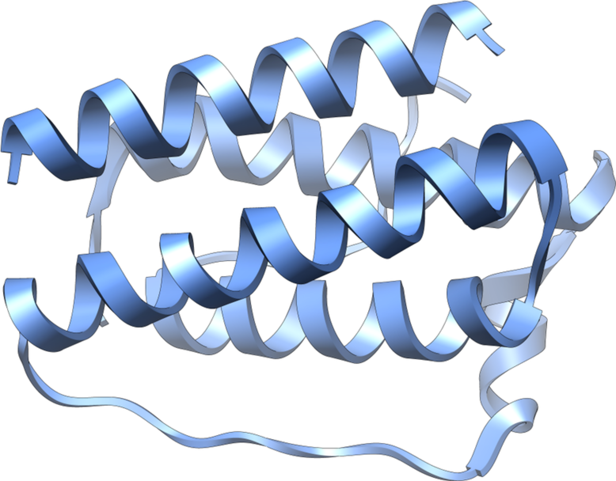 A leptin molecule (shown above) is a protein and consists of chains of amino acids.