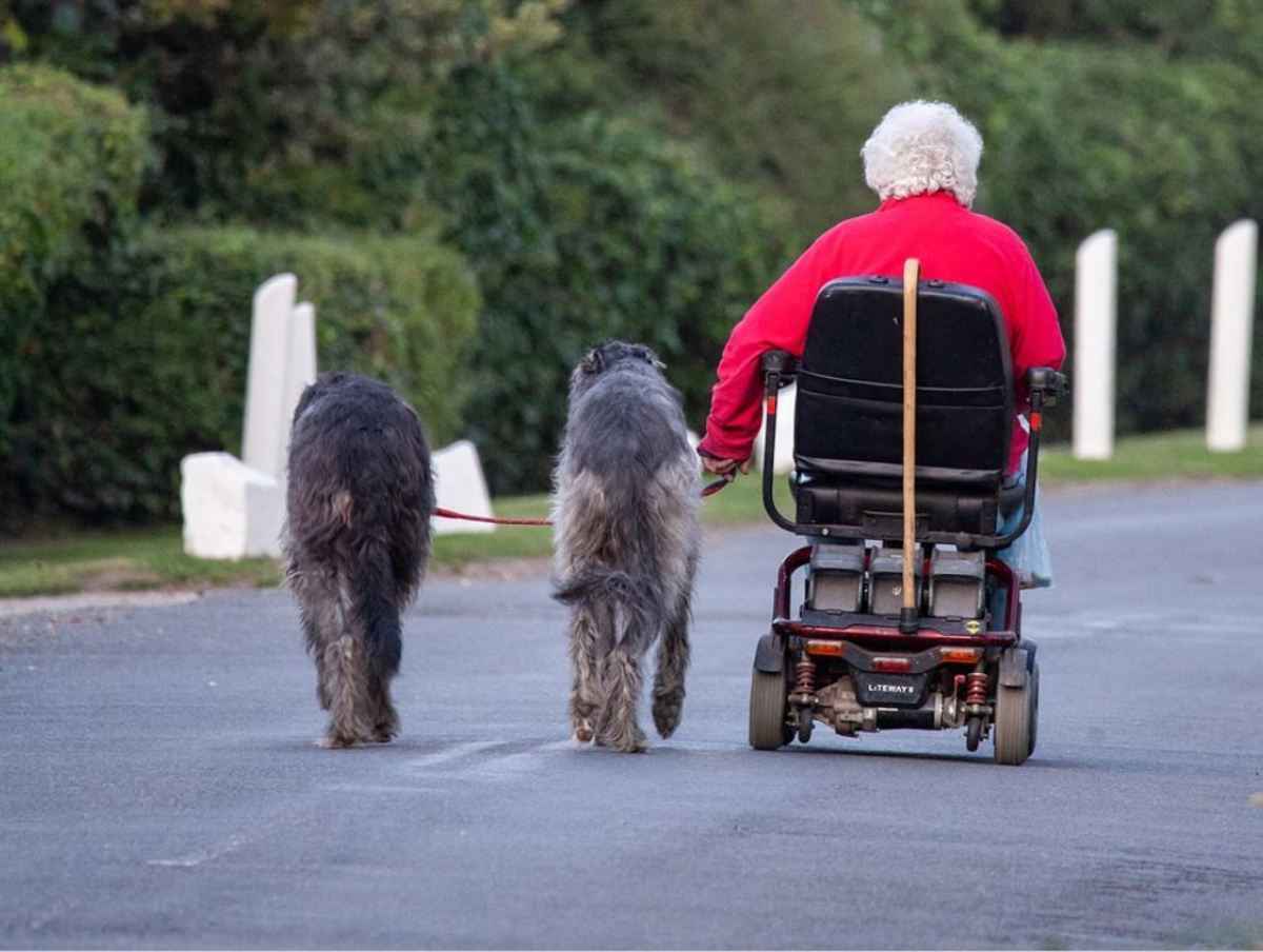 Irish wolfhounds are described as being  blessed with a calm, affectionate and gentle nature.