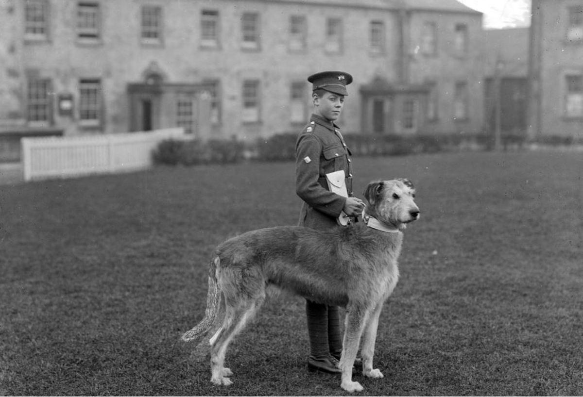 The Irish Guards' mascot was an Irish Wolfhound.