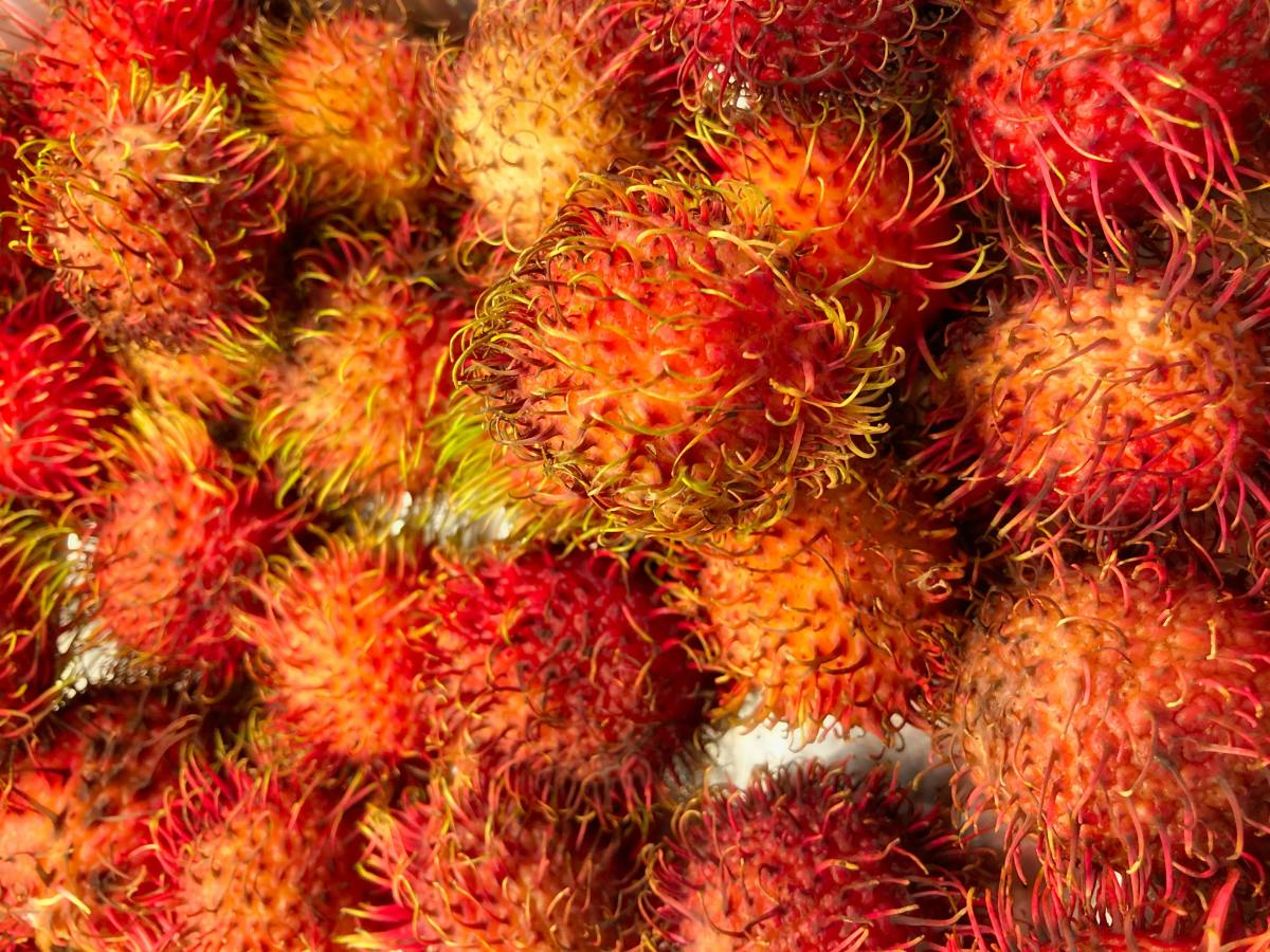 Describe the shape, size and texture of the rambutan fruit.
