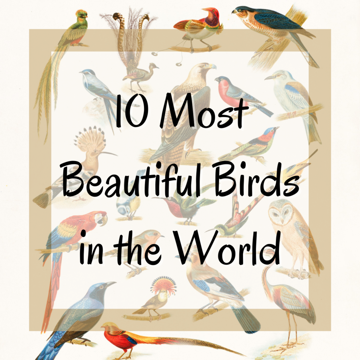 Learn facts and info about some of the world's most beautiful birds!