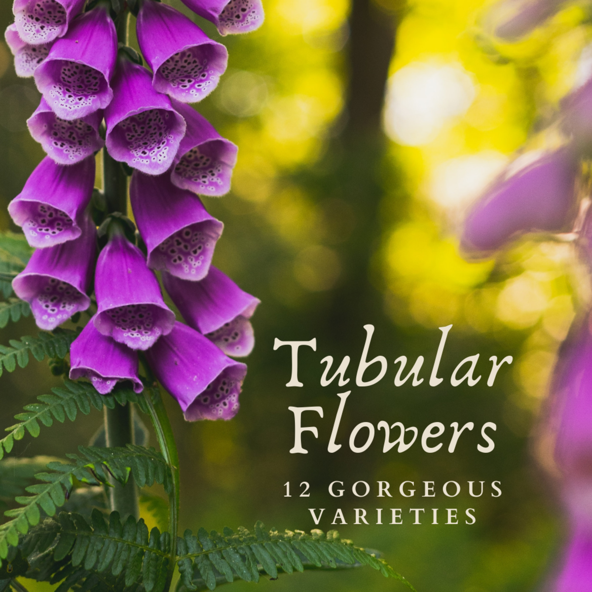 A List of Tubular Flowers: Top 12 Tube-Shaped Flowering Plants