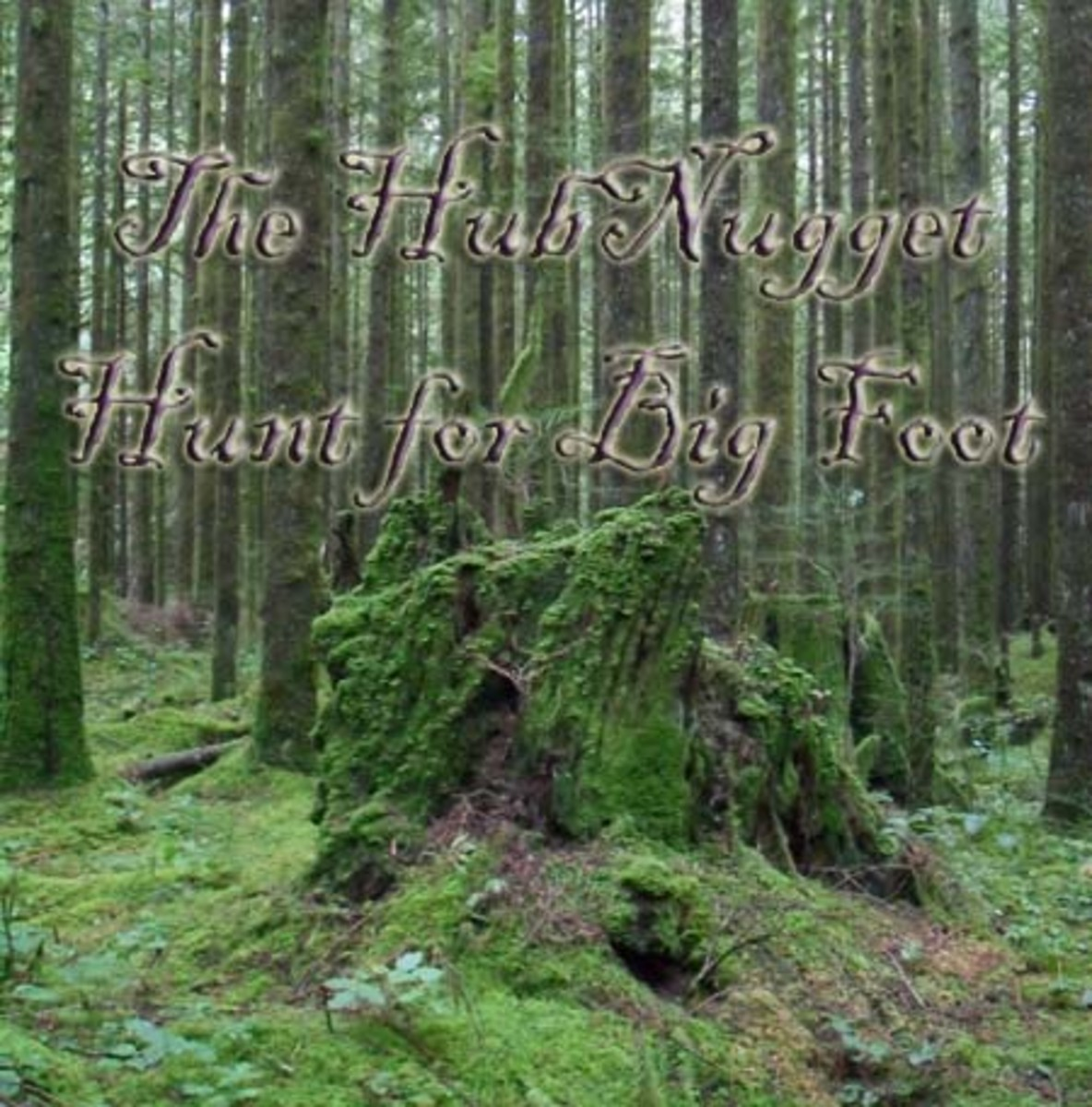 The HubNugget Hunt for Big Foot