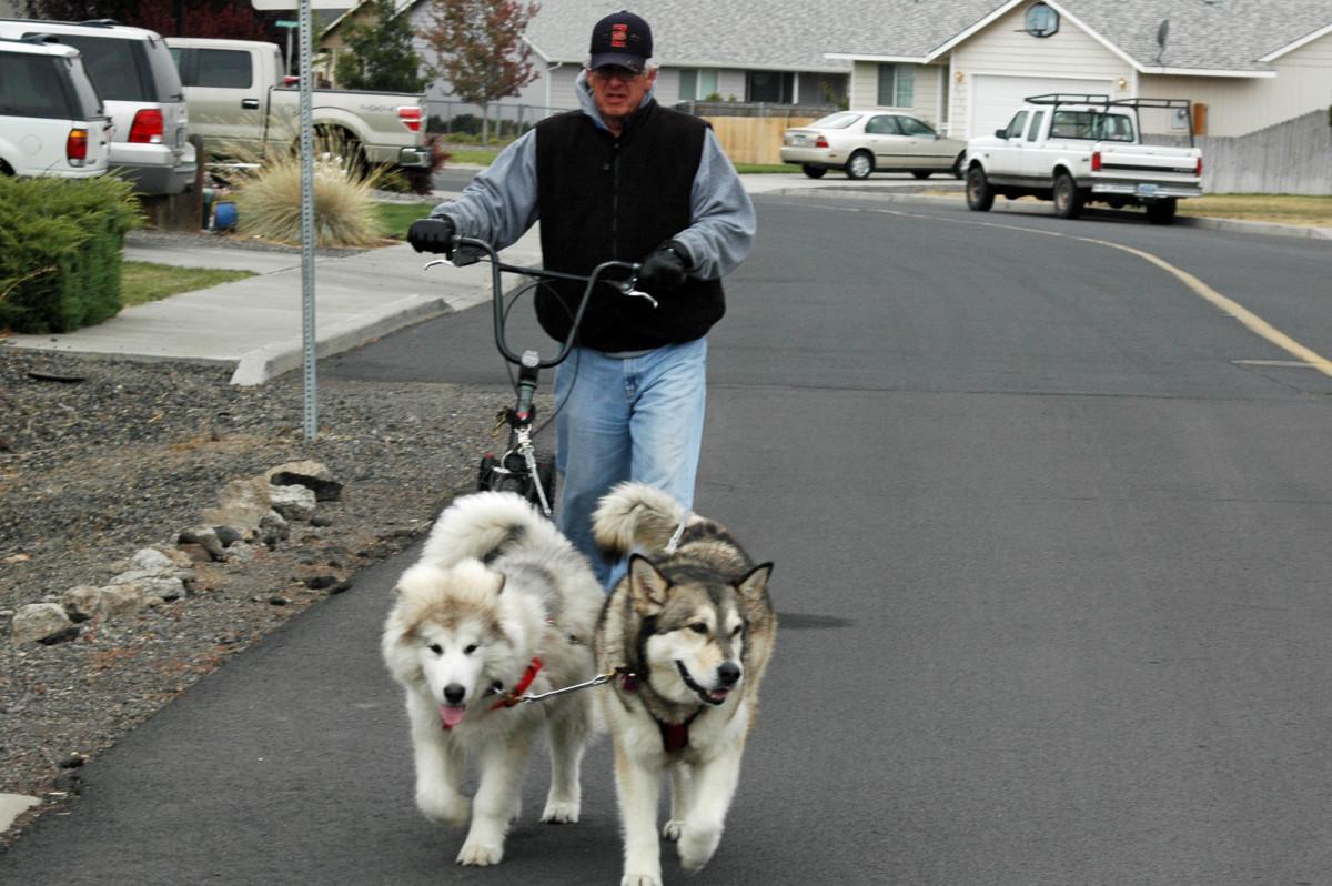 Griffin in training - Denaya leading the way