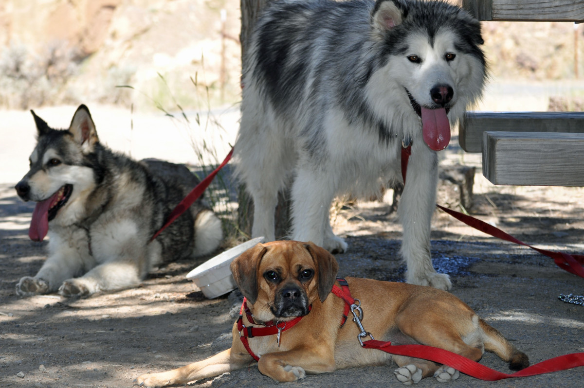 Hiking with friends (Denaya, Griffin and Molly after hiking Smith Rock)