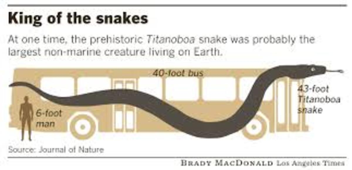 Titanoboa considered to be as long as a school bus